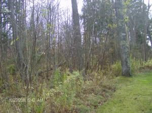 Lot 14 Huckleberry Rd, Trout Lake, MI 49793