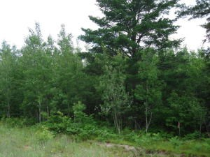 Lot #7 Huckleberry Rd, Trout Lake, MI 49793