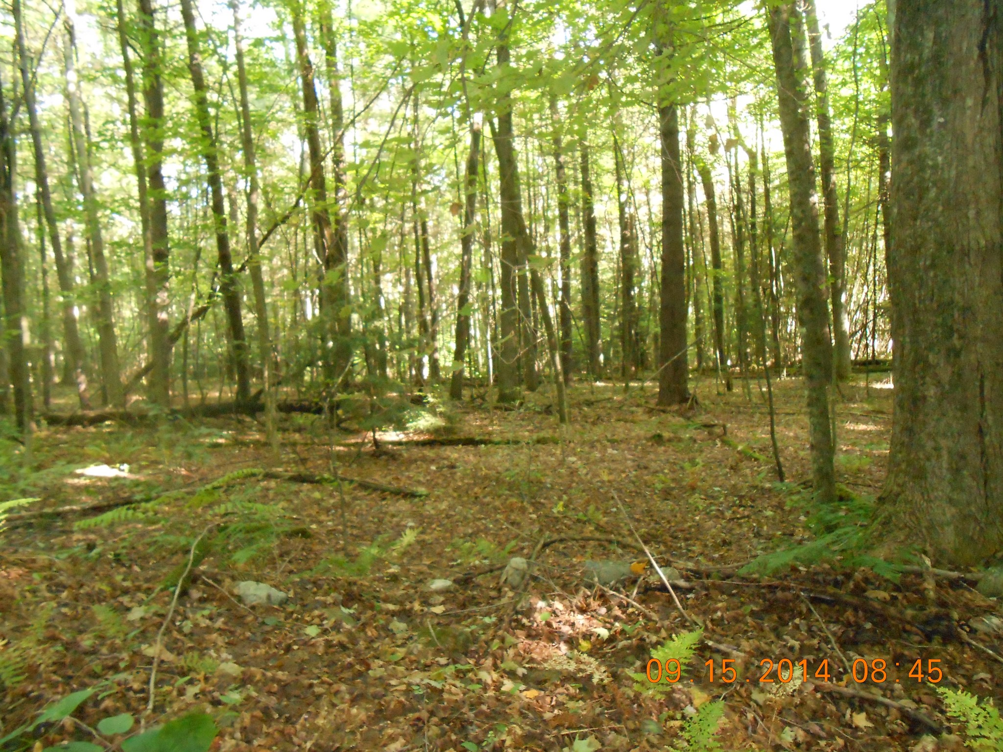 Lot 4 HERMANCE RD, Galway, NY 12074
