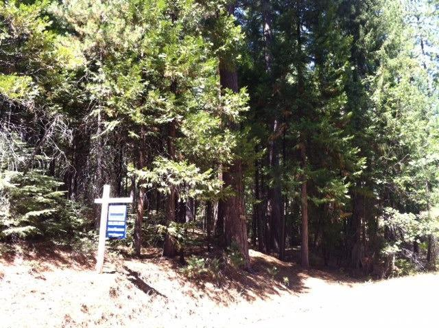 5373 Wooded Glen Road, Grizzly Flats, CA 95636