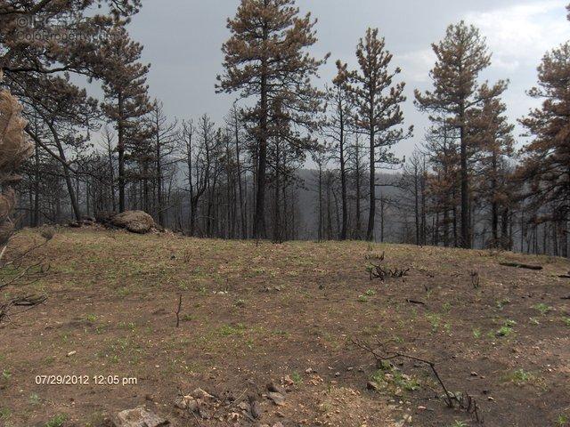 0 Rist Creek Rd, Bellvue, CO 80512