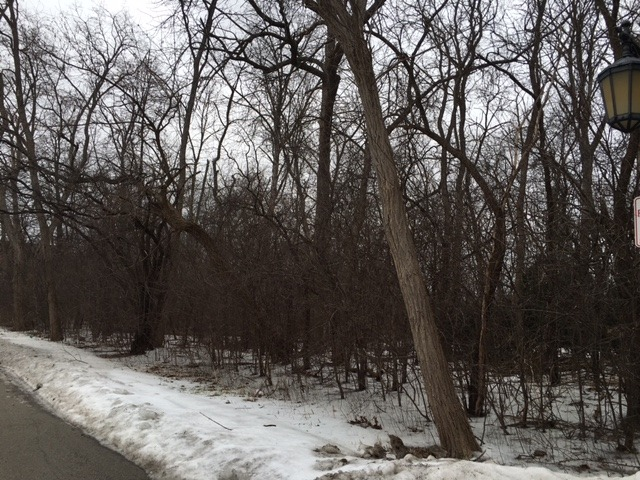 Lot 1 Deerpath Square, Lake Forest, IL 60645