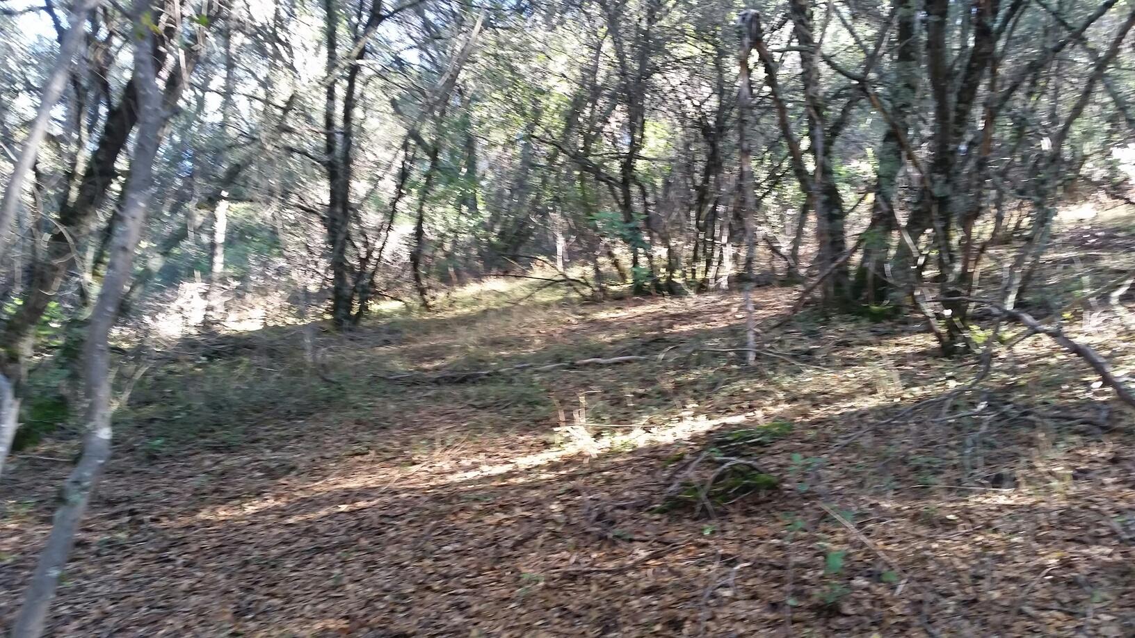 12900 New York Ranch Road, Jackson, California 95642