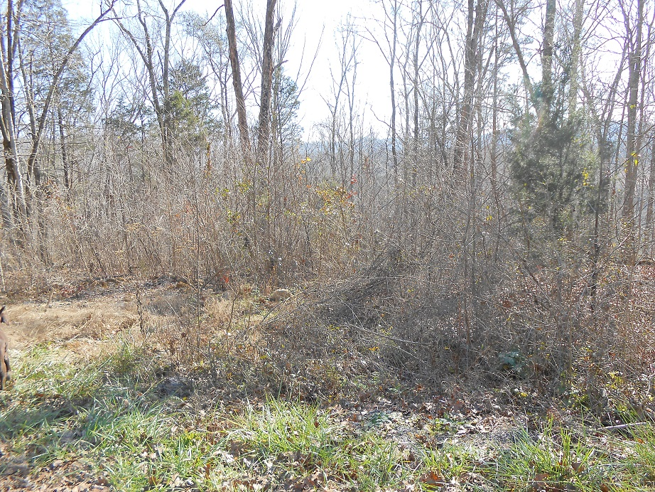 Lot 3 & 4 Colonial , Burnside, Kentucky 42519