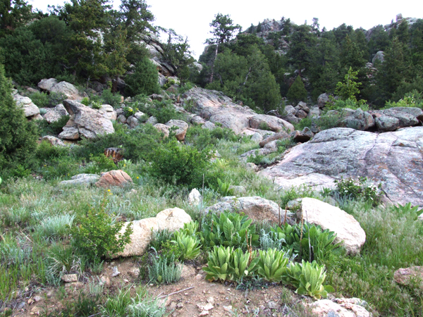 175 CURRY DR, Estes Park, Colorado 80517