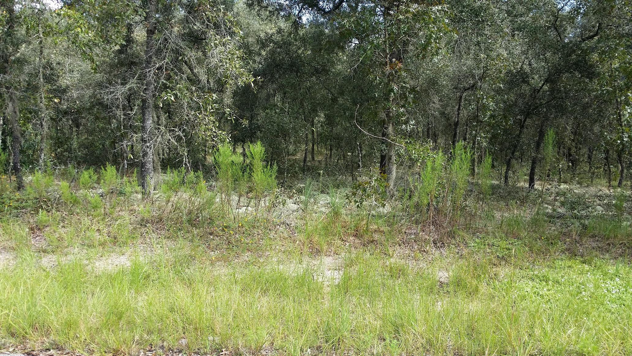LOT 17 SW 65 LOOP, Dunnellon, Florida 34432