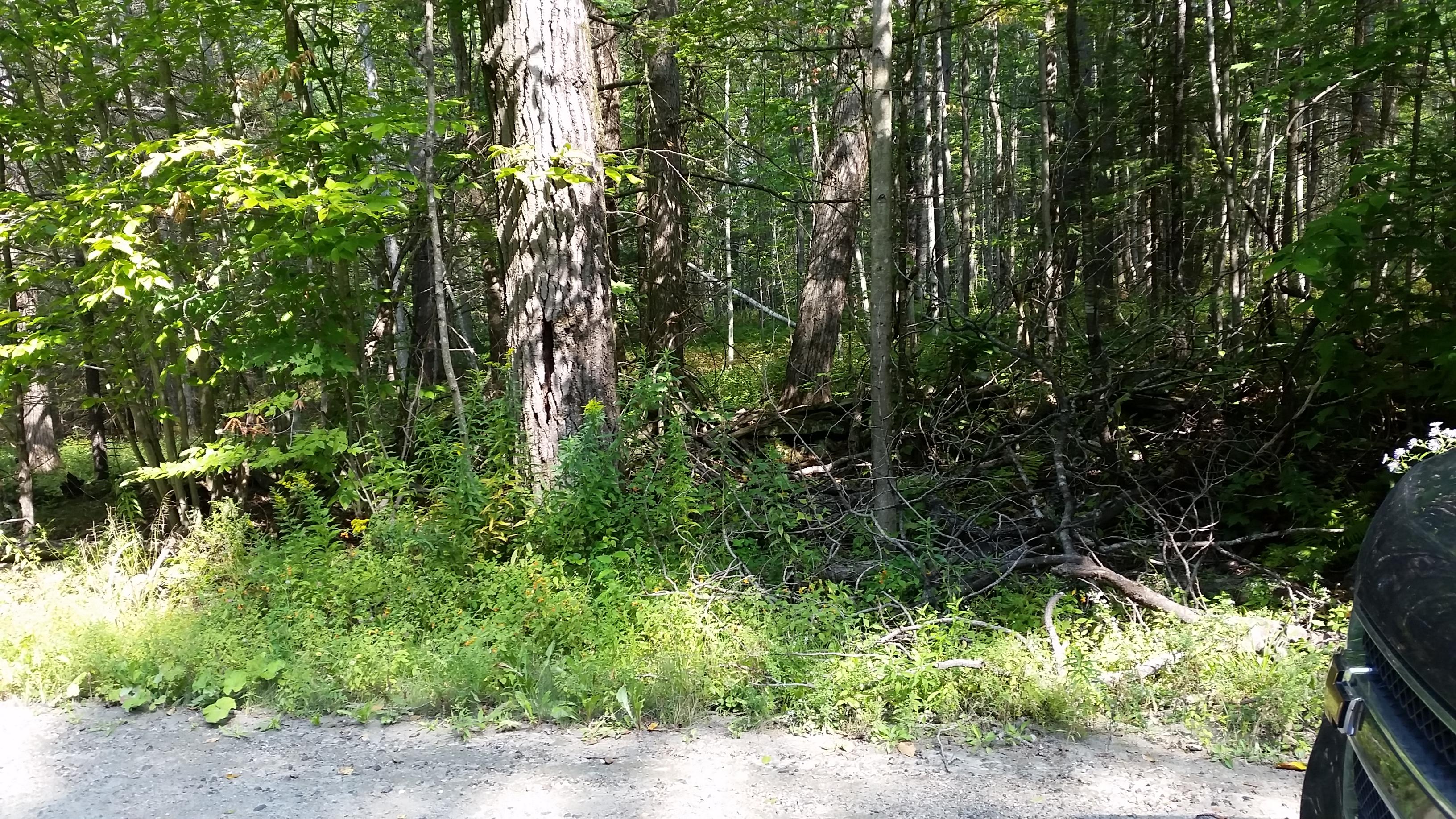 1 Newton Rd, Cavendish, Vermont 05153