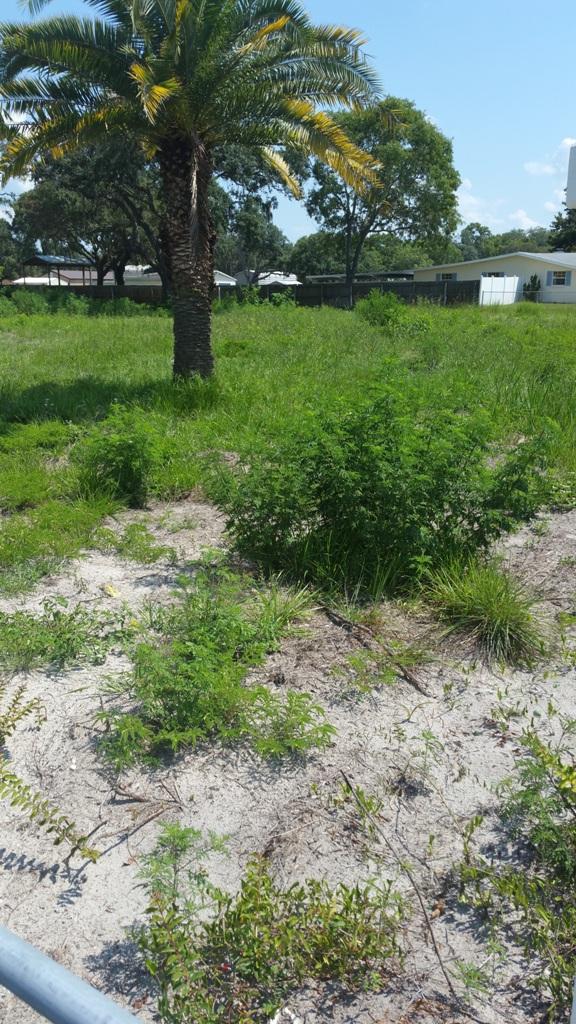 0 Minnieola Dr., New Port Richey, Florida 34654