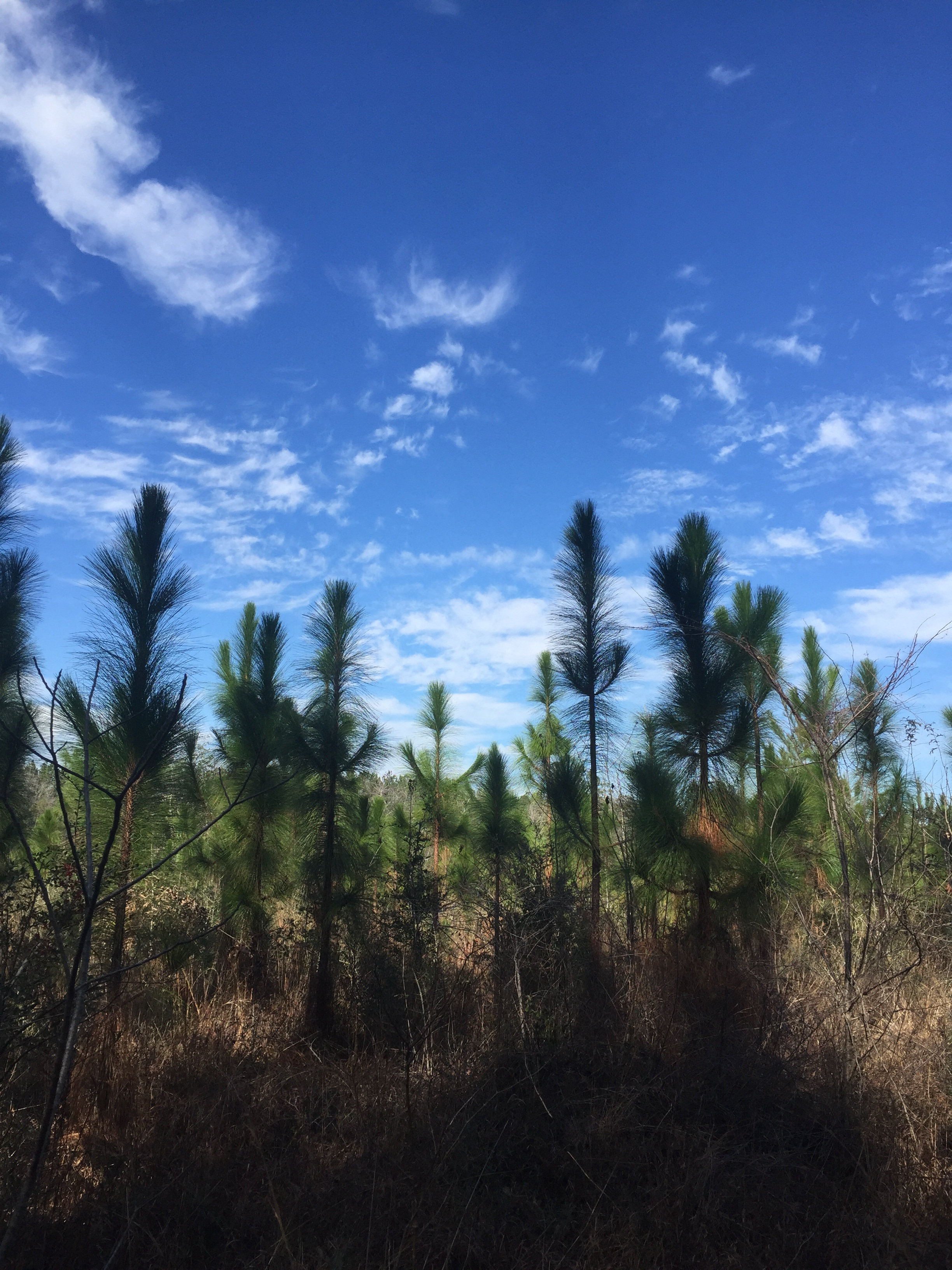 80 ac. Forest Lake Road, Beaumont, Mississippi 39423