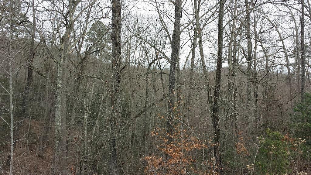 153.5 Ac. Hwy 700, Whitley City, Kentucky 42653