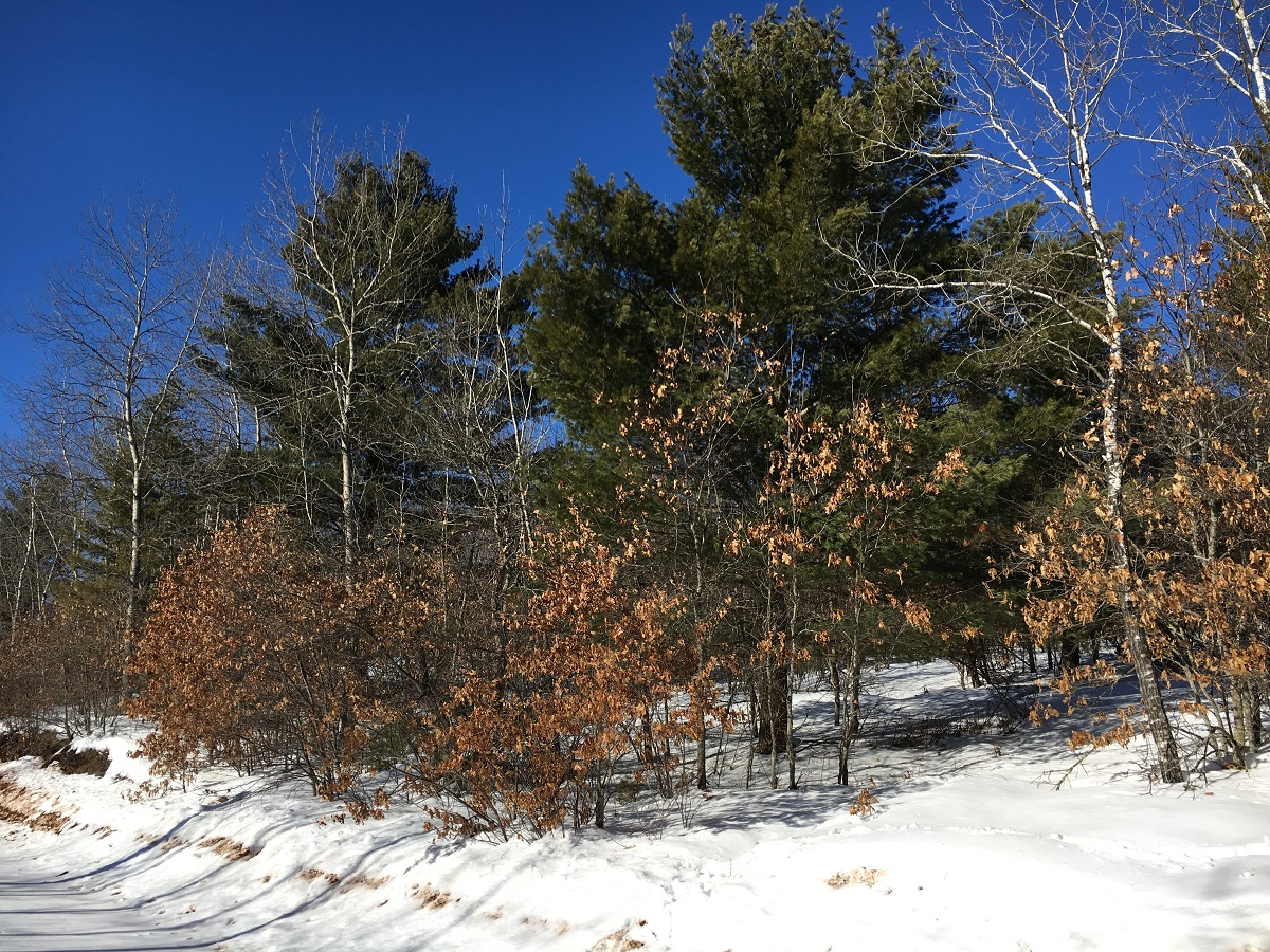 NW,NE Pine Lake Road, Iron River, Wisconsin 54847