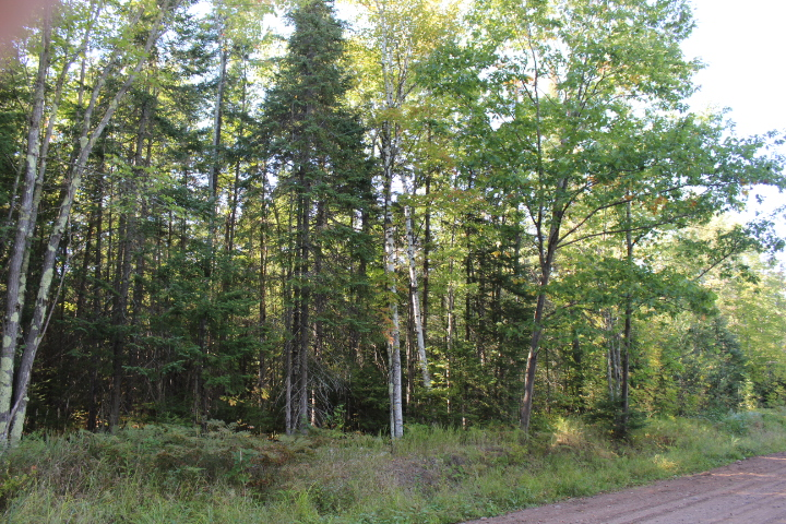 XXX Hoover Line Rd, Iron River, Wisconsin 54847