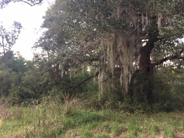 0 Mandane Dr, Lacombe, Louisiana 70445