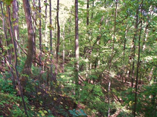 19 Ridgecrest Drive, Lake Lure, North Carolina 28746