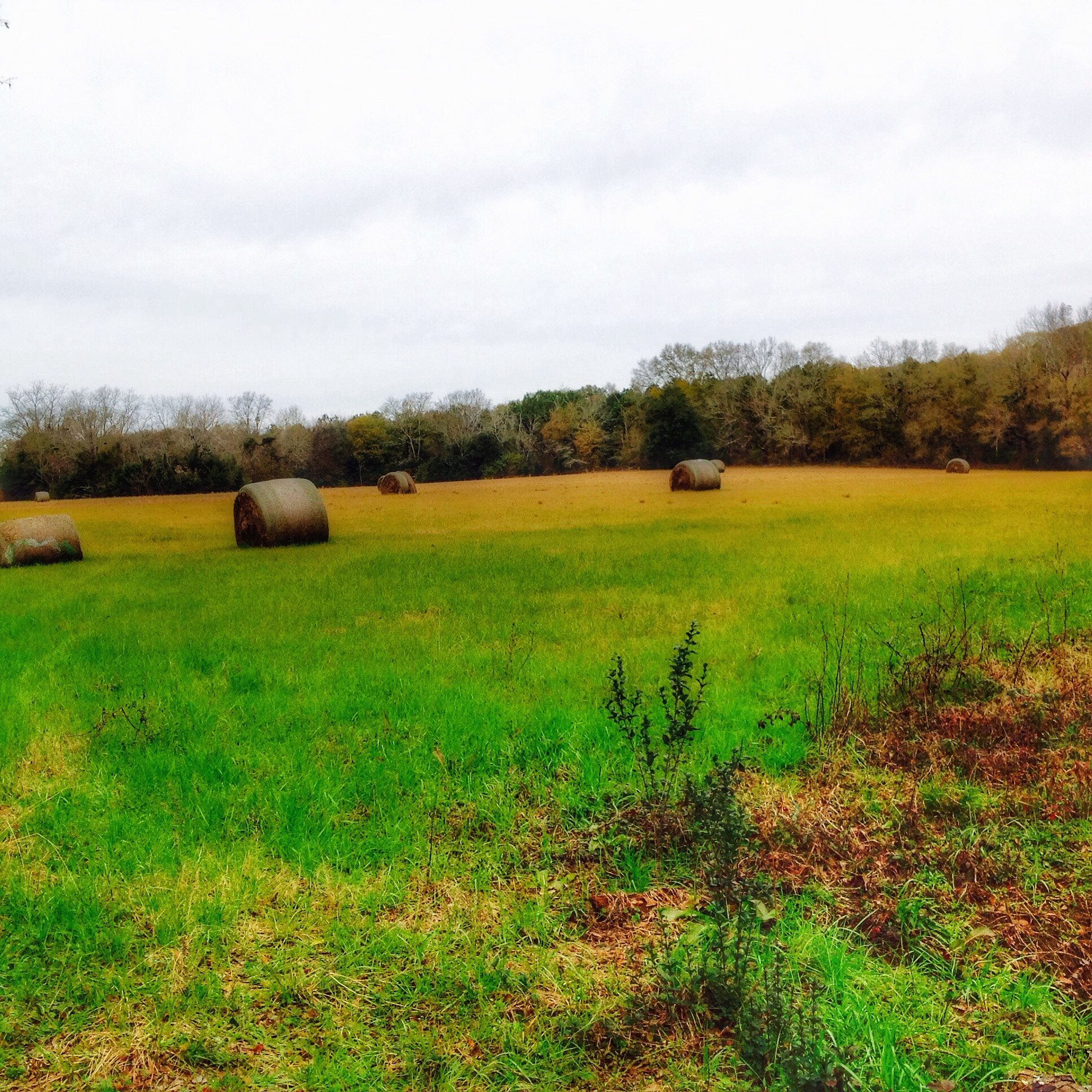 0 Old Highway 84, Ashford, Alabama 36312