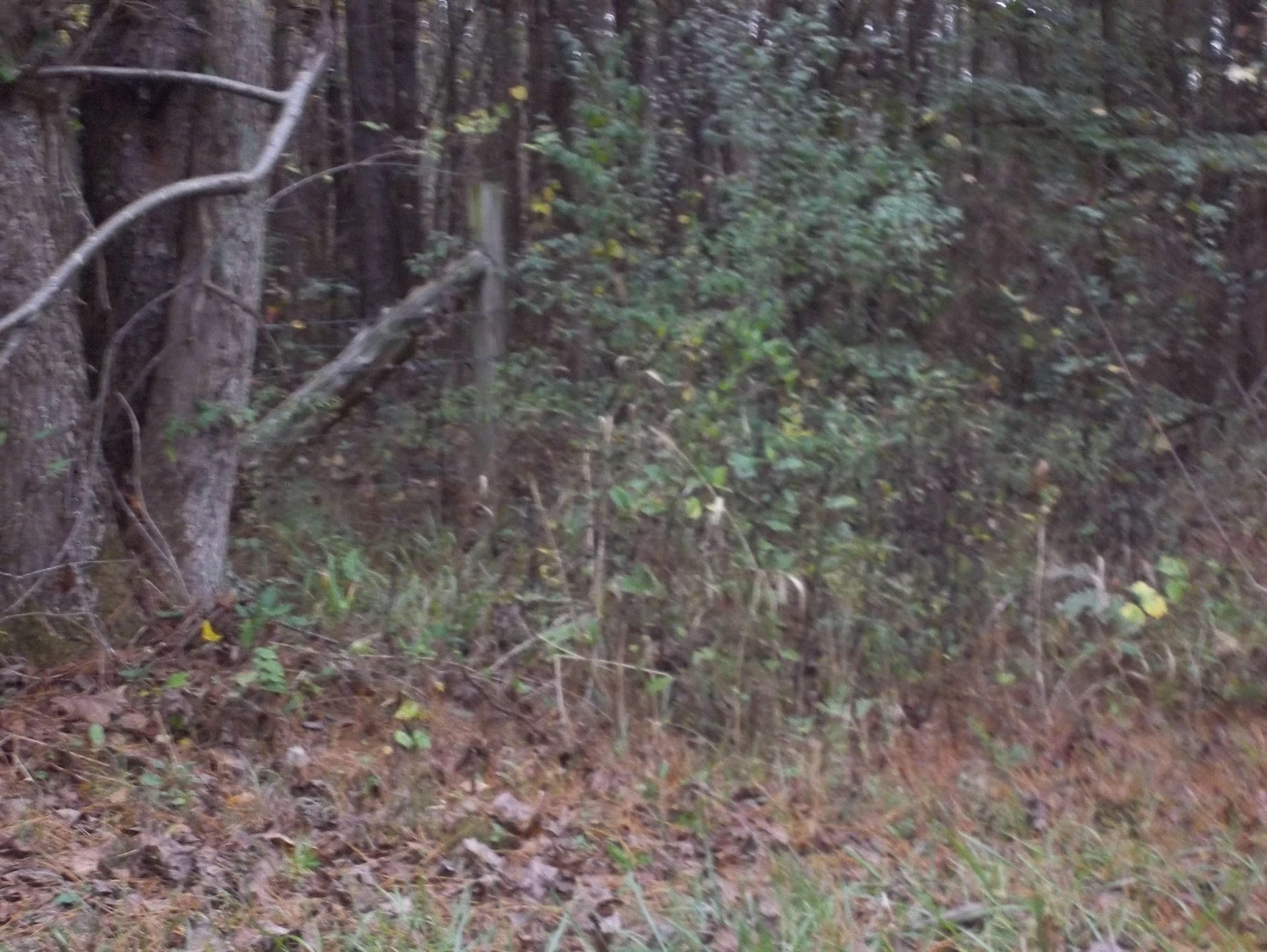 County Hwy 366, Bear Creek, Alabama 35543