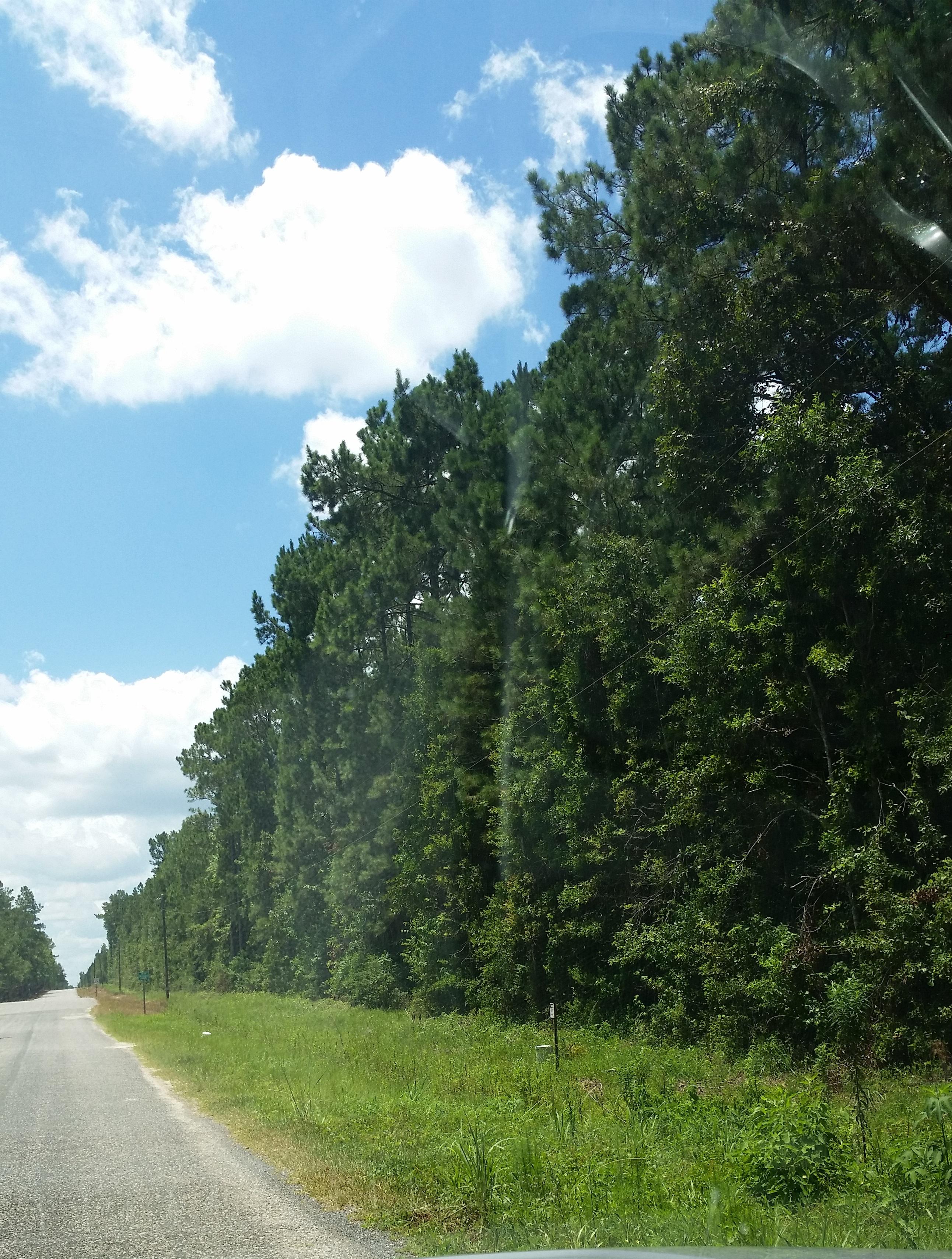 TBD Gearen Rd, Dequincy, Louisiana 70633