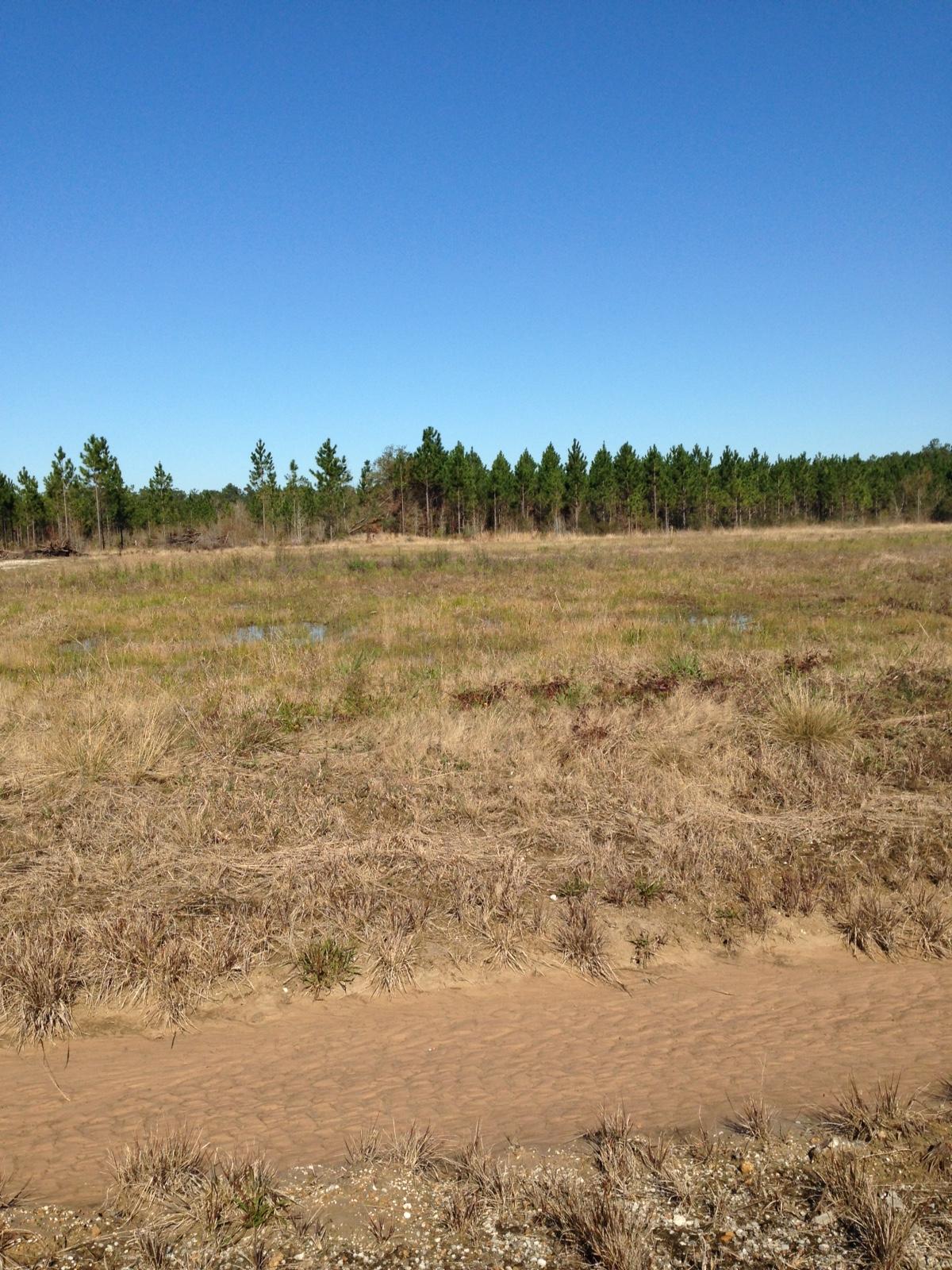 4375 Navajo Trail, Vinton, Louisiana 70668