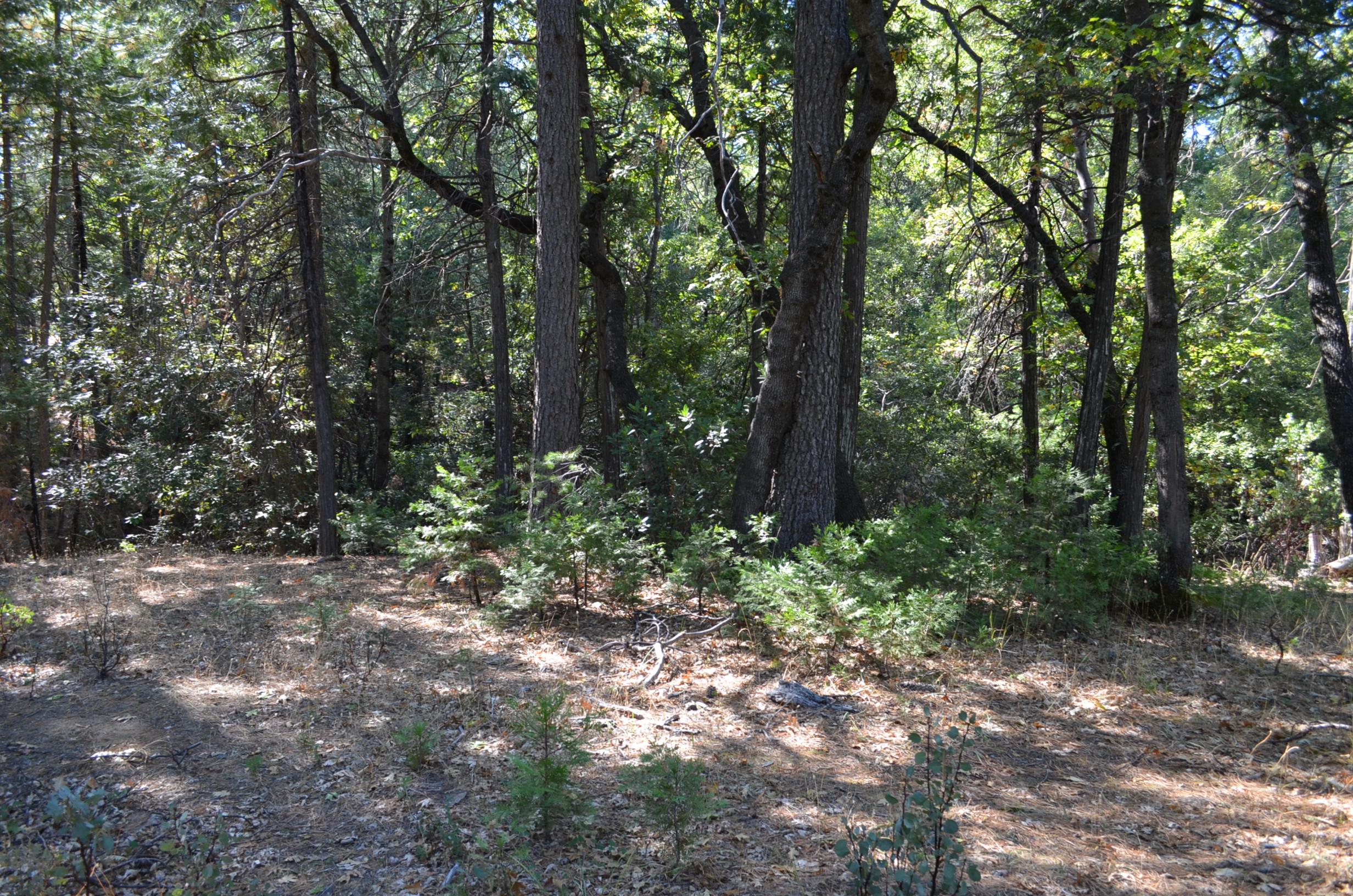 BALD ROCK ROAD, Berry Creek, California 95916