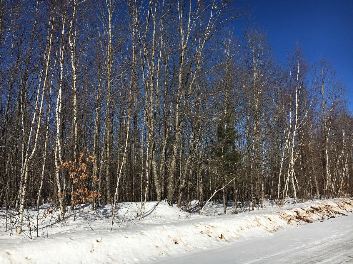 NE,NE Pine Lake Road, Iron River, Wisconsin 54847