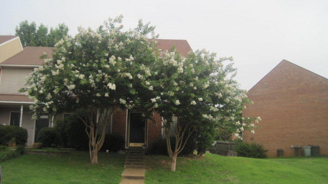 2010 Barry Cove, Oxford, Mississippi 38655