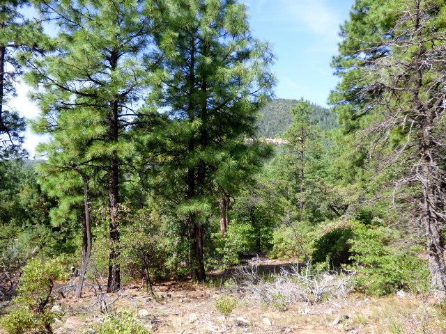 154  Windsong Ln, Pine, AZ 85544