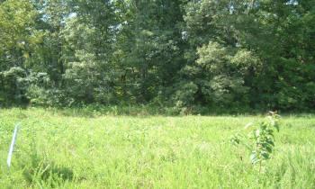 Lot 47 Shepperd Subdivision, Nancy, Kentucky 42544