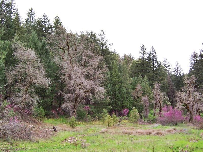 87acres Hwy 299E, Bella Vista, CA 96008