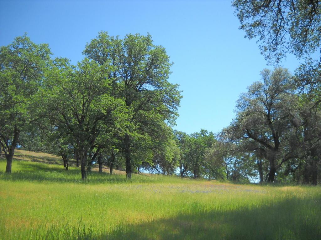 Honeywood Ln., Bella Vista, CA 96008