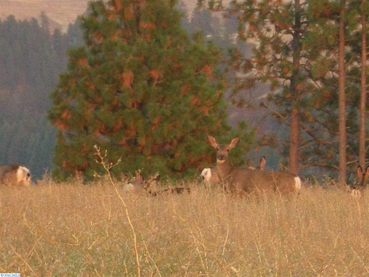 34 Red Tail Ridge, Colfax, Washington 99111