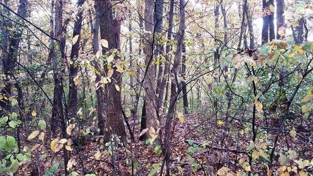 20 Acres Timber Trl, Genoa, IL 60135