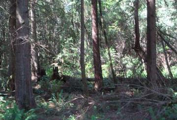 157xx Fairview Lake Rd SW, Port Orchard, WA 98367