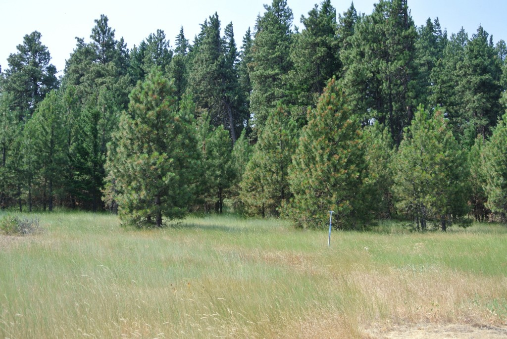 3 Clubhouse Rd, Cle Elum, WA 98922