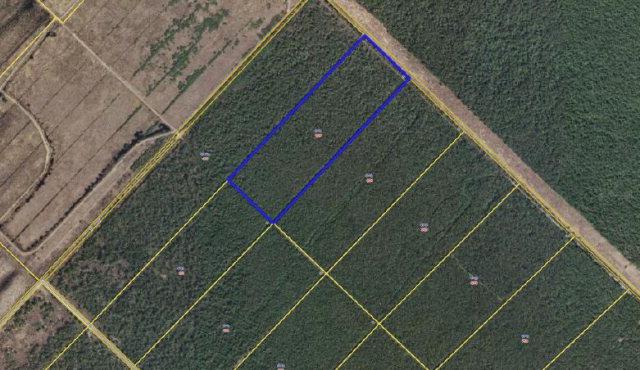 Lot 55 POCOSIN FARMS, Belhaven, North Carolina 27810
